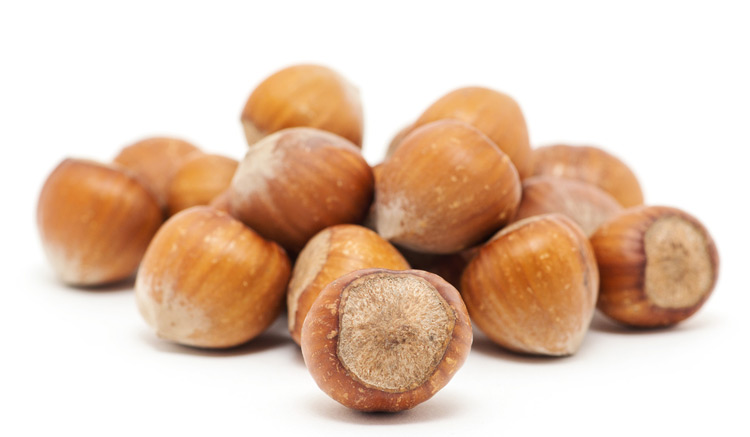 wholesale hazelnuts