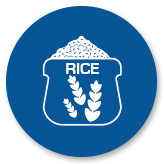 Interra International – Quality Wholesale Rice Distribution