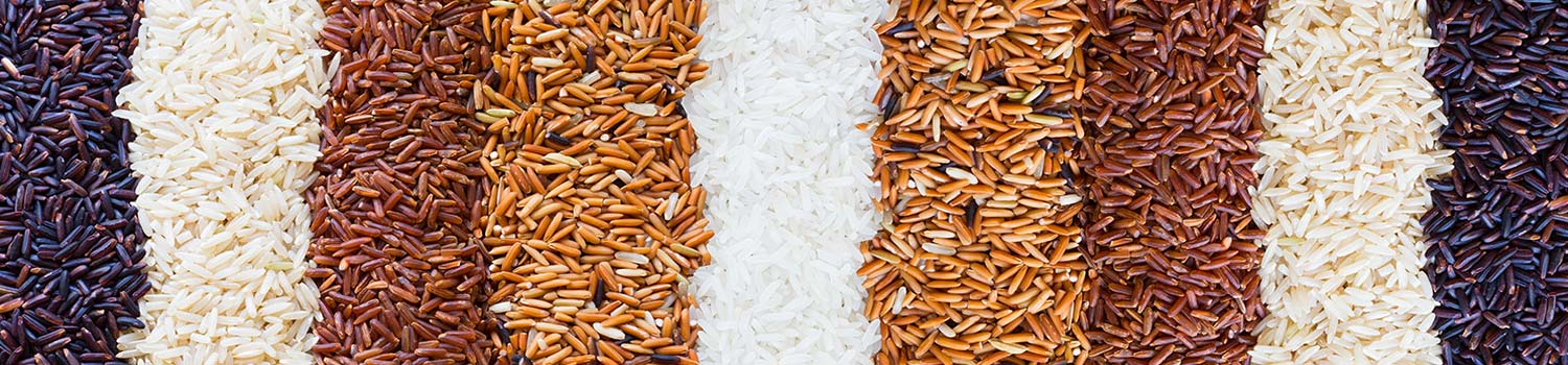 wholesale rice distributor
