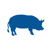 wholesale pork products