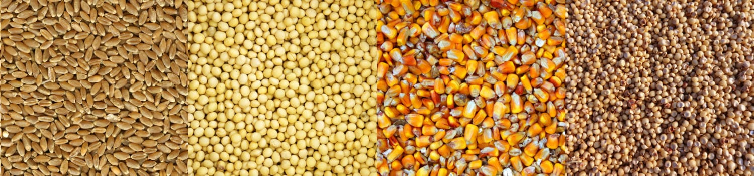 corn, soybean, soybean meal, wheat, DDGS, sorghum, corn gluten meal