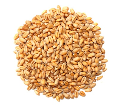 Wheat grain products