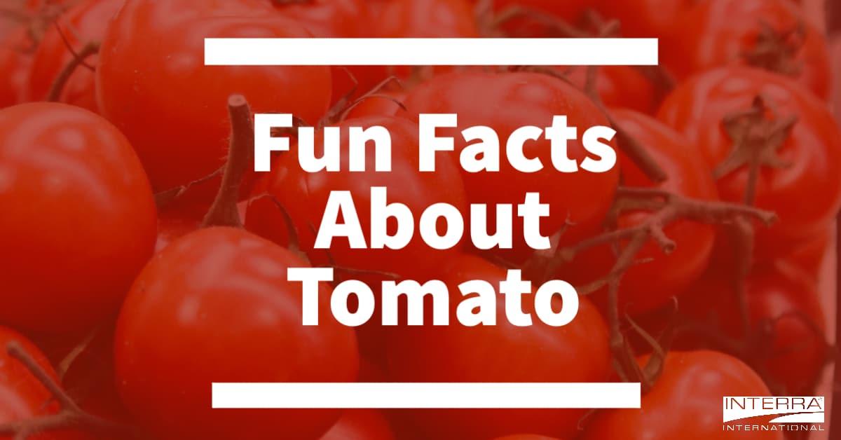 Interra International   Global Trader Of Bulk Tomato Products