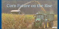 Interra International | Corn Industry News