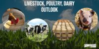 Interra International | Poultry And Dairy Outlook