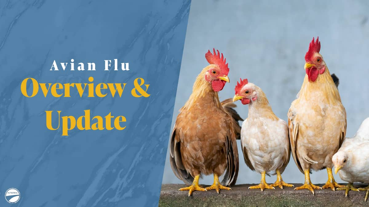 Interra International | Wholesale Poultry Products